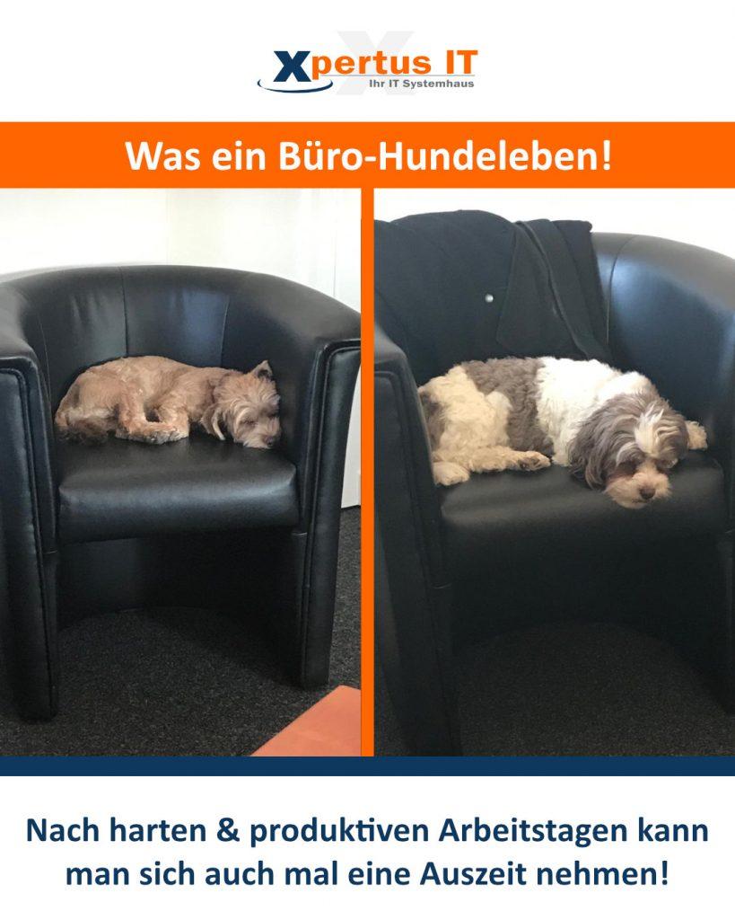 Was ein Büro-Hundeleben!