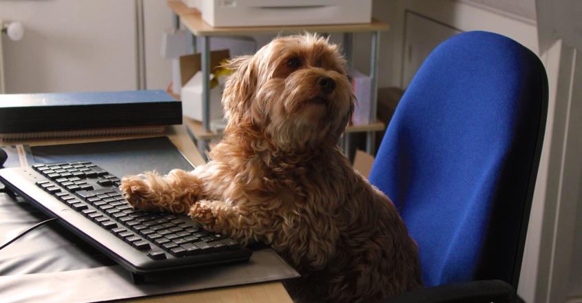 Sehr Gute Gründe für einen Bürohund