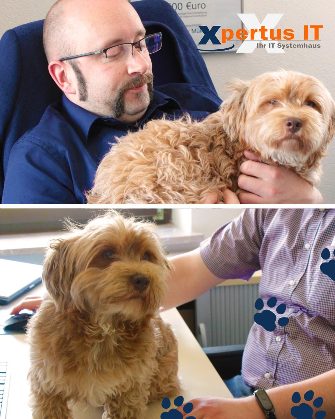Facebook-Post-Bürohund-Babsi