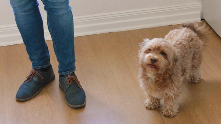 Ein Hund im Büro – Babsis Alltag